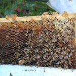 Managing the Beehive